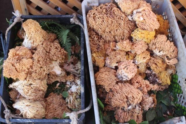 Sinop'un Türkeli ilçesinde, sonbaharın gelmesiyle toplanan mantarlar köylü pazarında satılıyor.