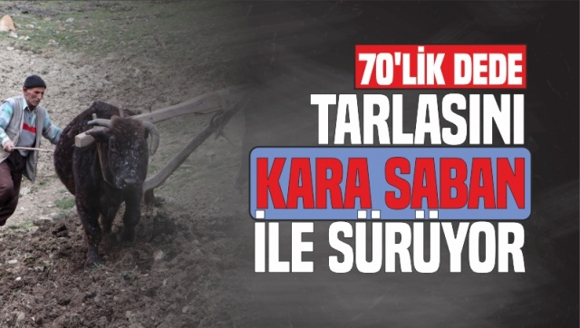 70'lik dede tarlasını kara saban ile sürüyor   Kastamonu'nun Araç ilçesinde ikamet eden 70 yaşındaki Mehmet Erim, traktörü olmadığı içir yıllardır tüm işlerini öküzleriyle gerçekleştiriyor.