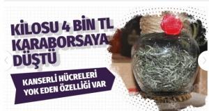 Türk beyaz çayında kanserli hücreleri yok eden etken bir maddeye rastlandı