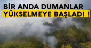 Sinop Boyabat yolunda orman yangını !