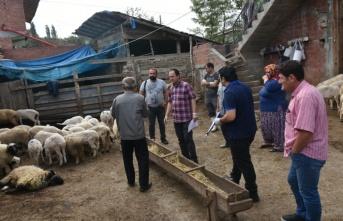 Boyabat Cemalettin Köyü'ndeki Koyun Ölümleri Araştırılıyor