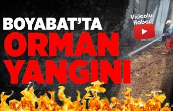 Boyabat'ta Orman Yangını Büyümeden Kontrol Altına Alındı