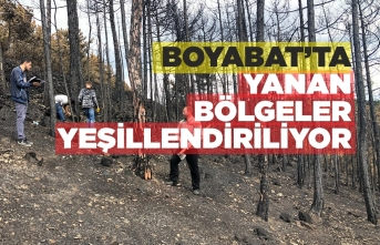 Boyabat'ta Orman Yangının İzleri Silinmeye Çalışılıyor