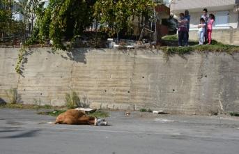 Yüksekten düşen inek saatlerce kurtarılmayı bekledi