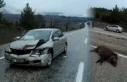 Boyabat'ta otomobil domuz sürüsüne çarptı