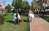 Boyabat'ta sokak köpekleri sahipsiz değil