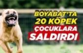 Boyabat Yenimahalle'de Köpek Saldırısı !