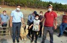 Boyabat'ta yetiştiricilere damızlık koç dağıtımı yapıldı