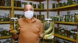 Profesör yılanların turşusunu kuruyor