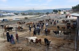Boyabat'ta Genç Çiftçilere Damızlık Düve Dağıtıldı