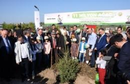 Aile, Çalışma ve Sosyal Hizmetler Bakanı Selçuk, Sinop'ta fidan dikimine katıldı