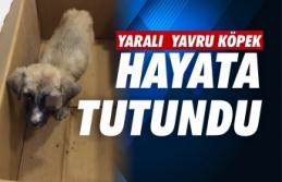 Boyabat'ta yaralanan yavru köpek tedavi edildi