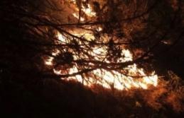 Boyabat'ta çıkan orman yangını söndürme...