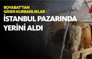 Boyabat'tan Giden Kurbanlıklar İstanbul Pazarında...