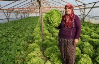 """Sebze Üreticisi """"Gül Abla"""" Devlet Desteği..."""
