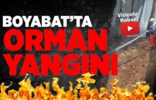 Boyabat'ta Orman Yangını Büyümeden Kontrol...