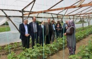 Kaymakam Aksoy, Yerli Sebze Üreticisi Topaçları...