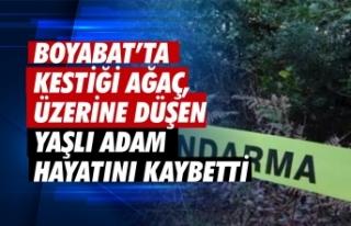 Boyabat'ta ağaç keserken talihsiz bir kaza...