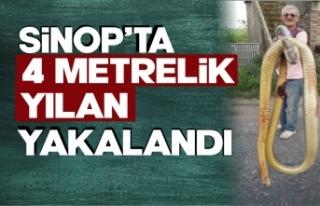 Sinop'ta 4 metrelik yılan korkuttu
