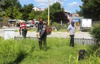 Belediye ekipleri çimleri biçiyor