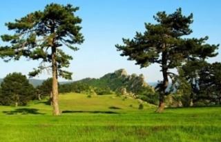 Bayat Yaylası Tabiat Parkı ilan edildi