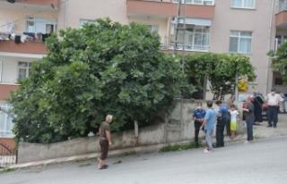 İncir ağacından düşen yaşlı adam yaralandı...