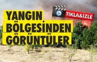 Yangın bölgesinden son dakika video görüntüler...