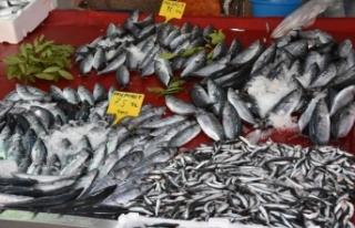 Karadeniz hamsisi tezgahlarda: Kilo 25 lira