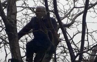 Ceza gelen vatandaş, intihar için ağaca çıktı