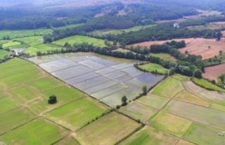 Sinop'taki sulu tarımın ekonomiye katkısı...