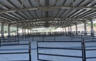 Boyabat'ta 4.1 milyon liraya mal olan hayvan pazarı...