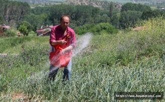 """""""Mayıs ve haziranda satılan sarımsaklar Taşköprü sarımsağı değildir"""""""