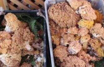 Mantar turşusu sevilerek tüketiliyor