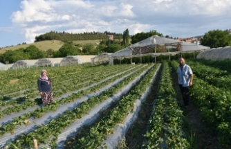 17 yıldır seracılık yapan Boyabatlı çift, doğal ürün arayanların tercihi oluyor