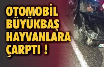 Otomobil büyükbaş hayvanlara çarptı: 2 yaralı