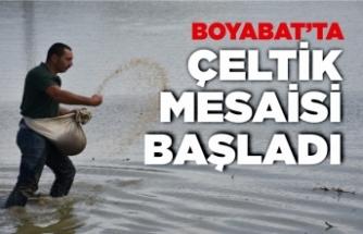 Boyabat'ta 2021 yılı çeltik ekimi devam ediyor