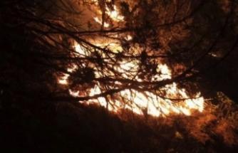 Boyabat'ta çıkan orman yangını söndürme çalışmaları sürüyor