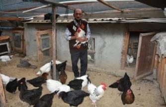 Tavukları ve köpekleri çalınan Boyabatlı hayvan sever vatandaş hırsızlar bulunsun diyor