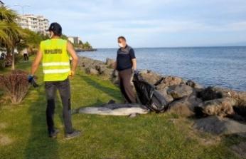Sinop'ta ölü yunus kıyıya vurdu