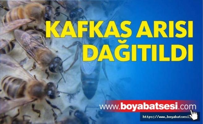 Saraydüzü'nde Kafkas ırkı ana arı dağıtımı yapıldı