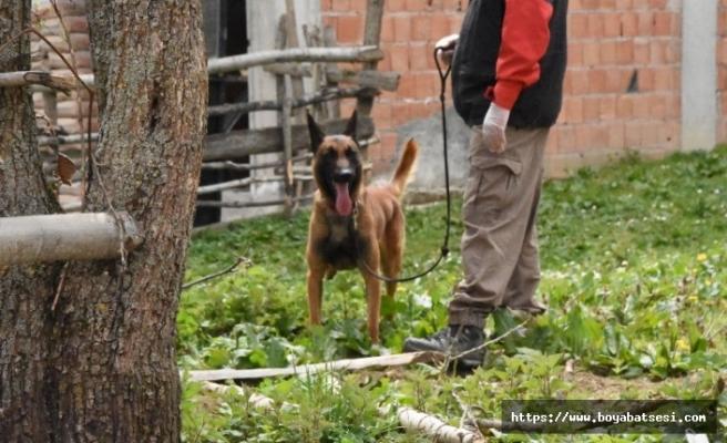 Kadavra arama köpekleri devreye girdi