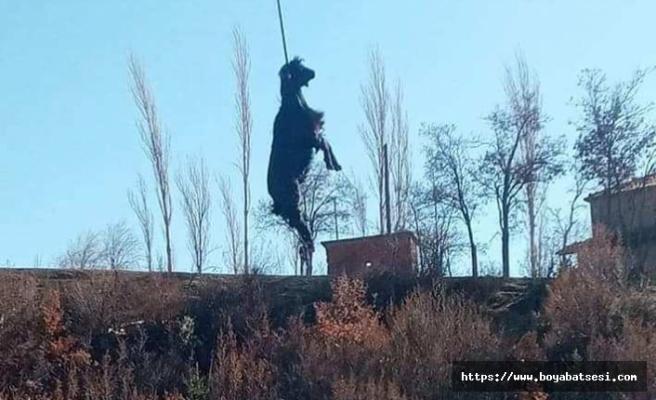 Boyabat'ta ilginç olay ! İnatçı keçi havada asılı kaldı