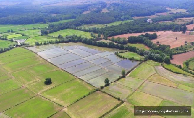 Sinop'taki sulu tarımın ekonomiye katkısı 71,5 milyon lira