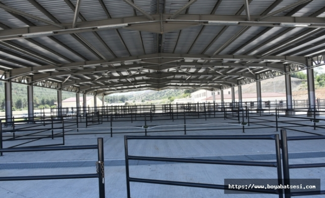 Boyabat'ta 4.1 milyon liraya mal olan hayvan pazarı tamamlandı