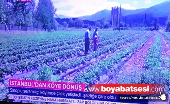 Boyabatlı Çilek Üreticisi İsmail Memiş TRT ekranlarında
