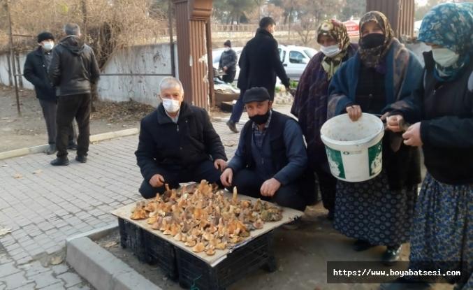 Boyabat'ta kış ortasında satılan günlük mantar şaşkınlık yarattı.