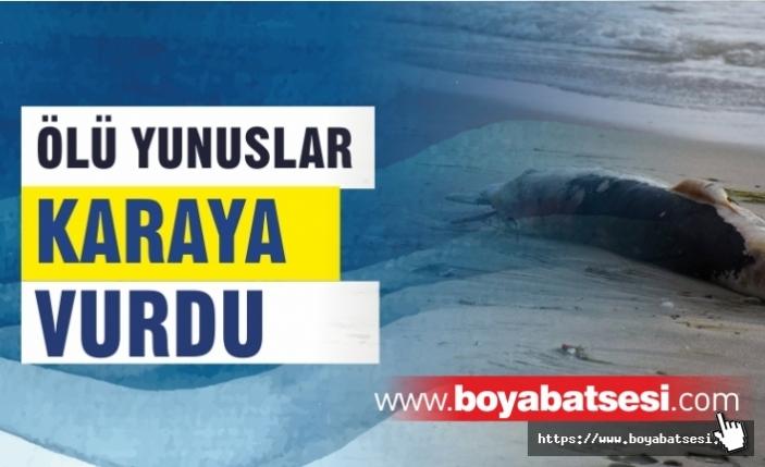 Sinop'ta 3 ölü yunus karaya vurdu