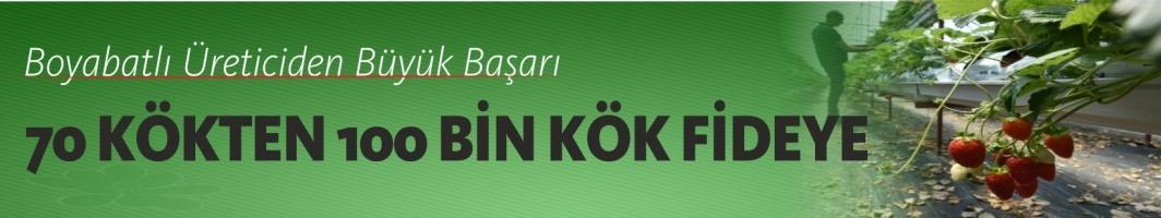 İstanbul'dan Köyüne Dönen İşçi , Patron Olup Çilek İhraç Ediyor.
