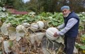 Boyabat Ilıca Köyü'nde Yetiştirilen Askıda Kabak, Görenleri Şaşkına Çeviriyor